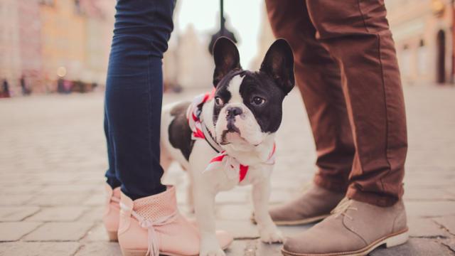 Should I Choose My Dog or My BF?